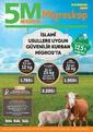 5M Migros 15 - 28 Temmuz 2021 Kurban Bayramı Kampanya Broşürü! Sayfa 1 Önizlemesi